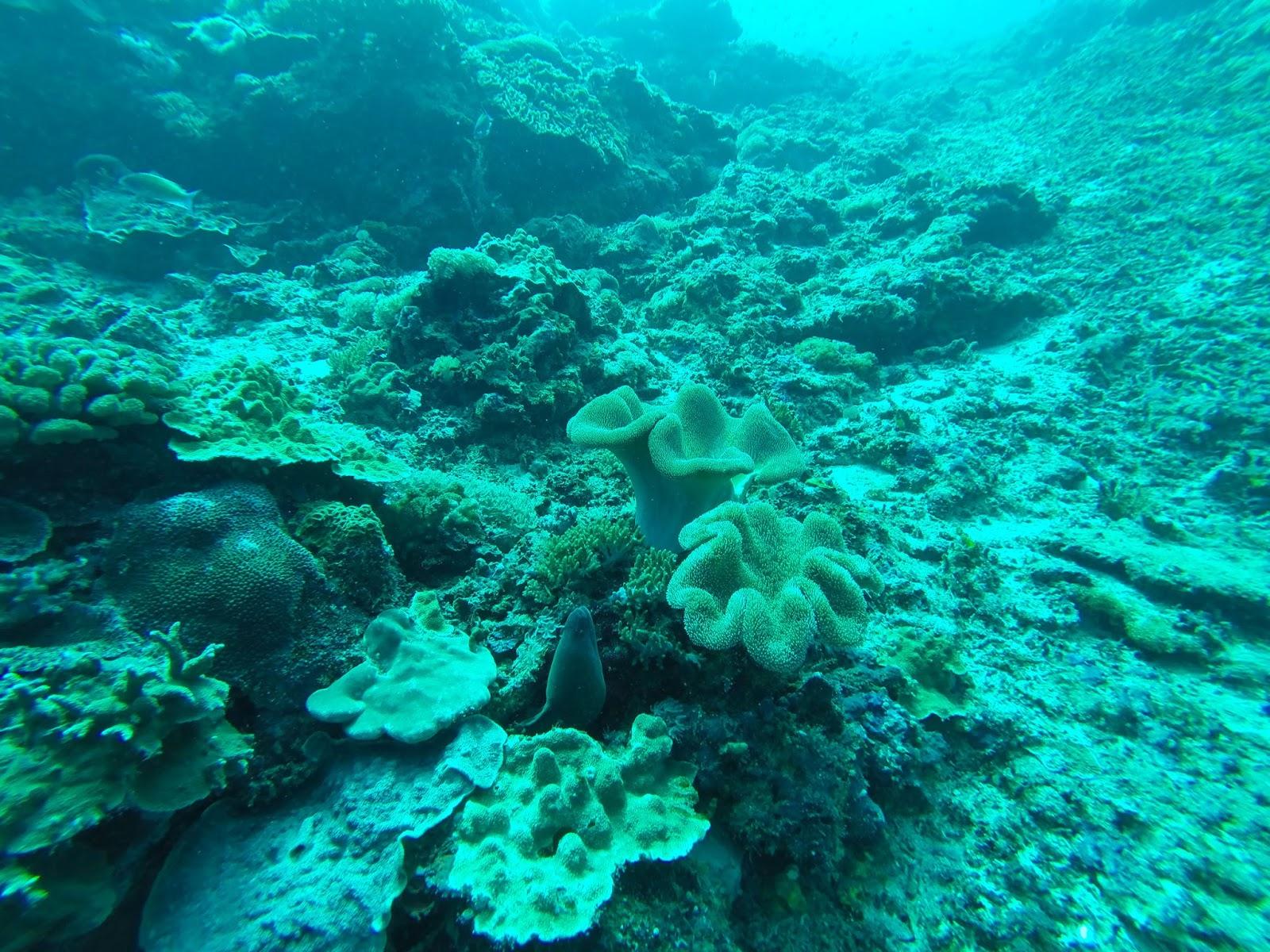 Buceo profundo en Nusa Ceningan, Bali