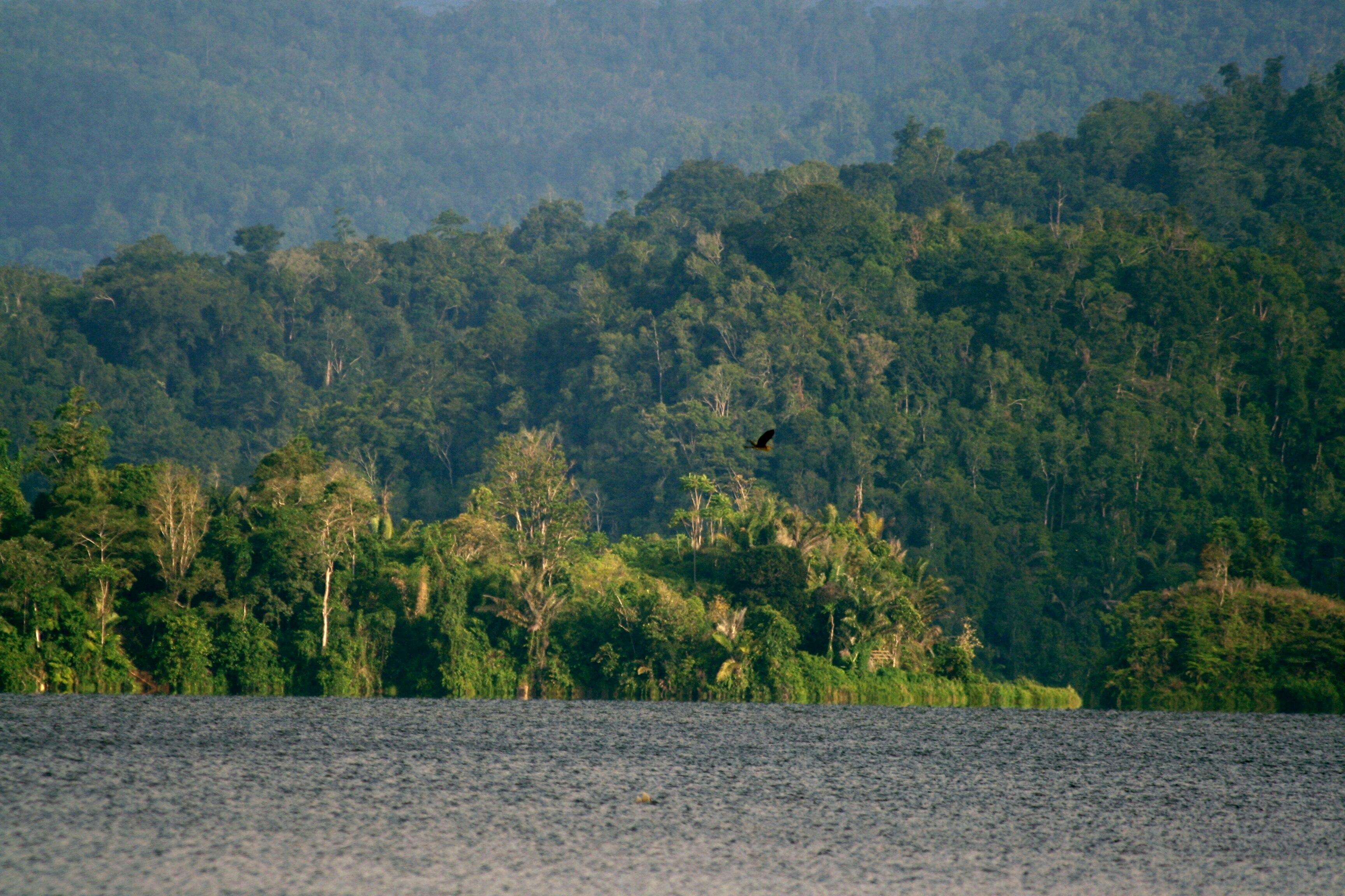 Parque Nacional de Lindu, Indonesia