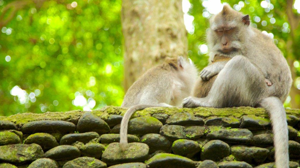 Bosque de los Monos En Bali