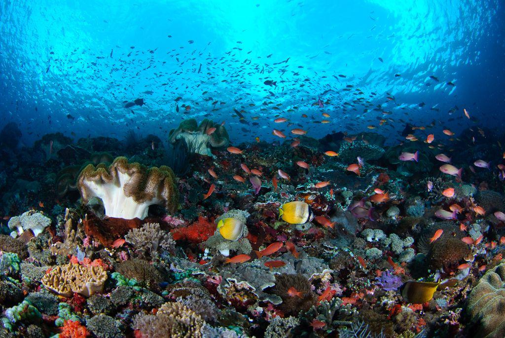 Buceo Nusa Lembongan, Bali, Indonesia