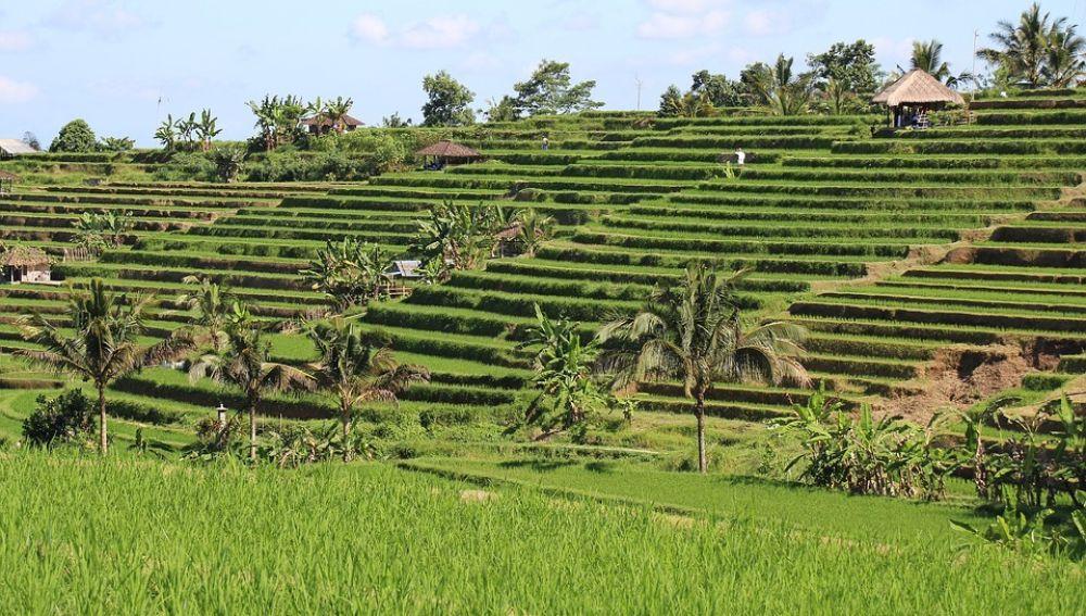 Arrozales en el pueblo de Tabanan, Bali