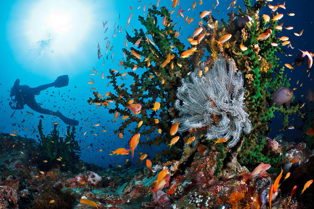 Arrecife Batee Tokong