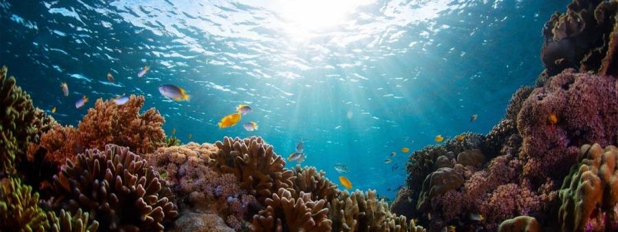 los arrecifes de Bali