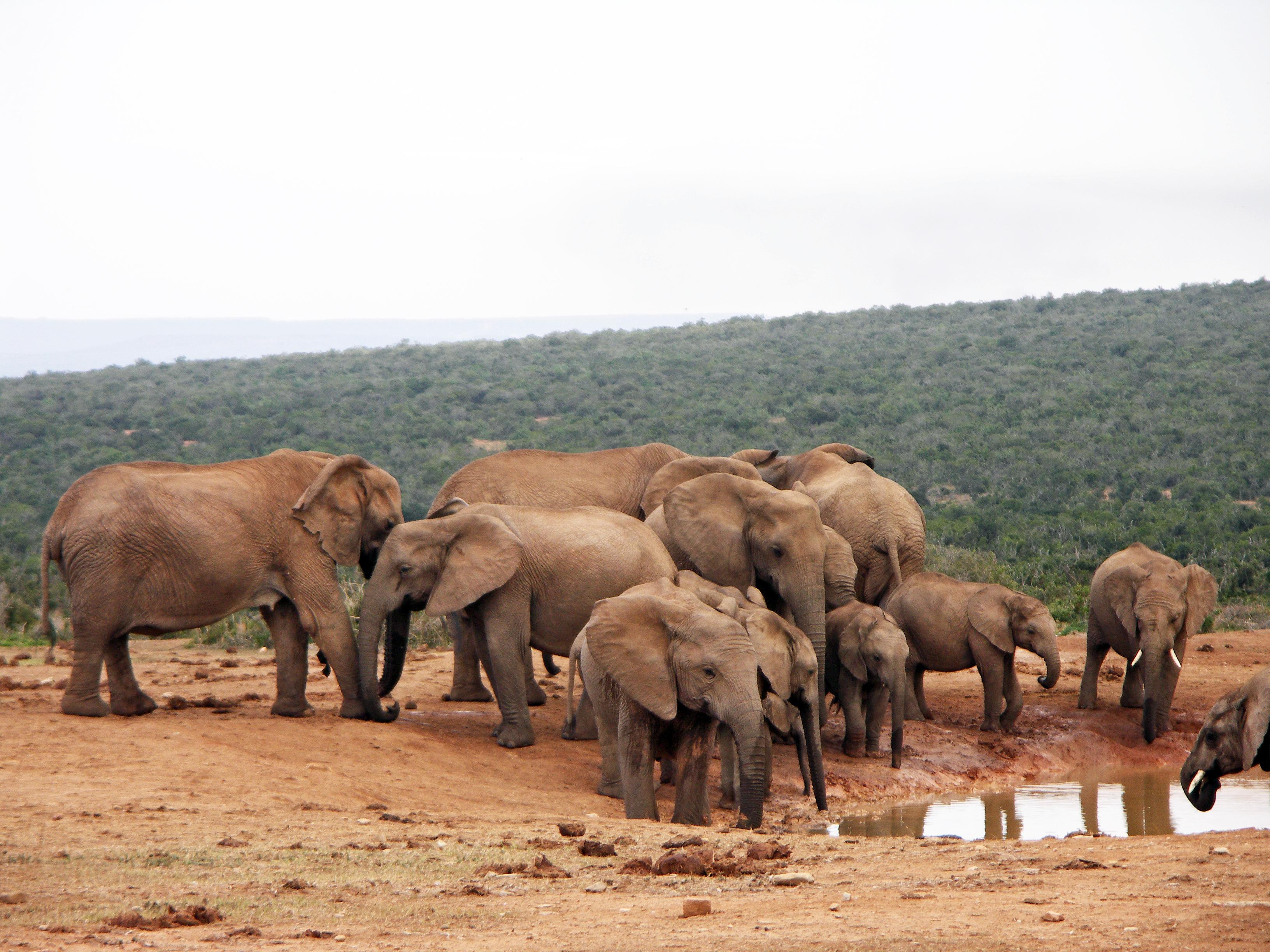 Parque de elefantes de Bintan