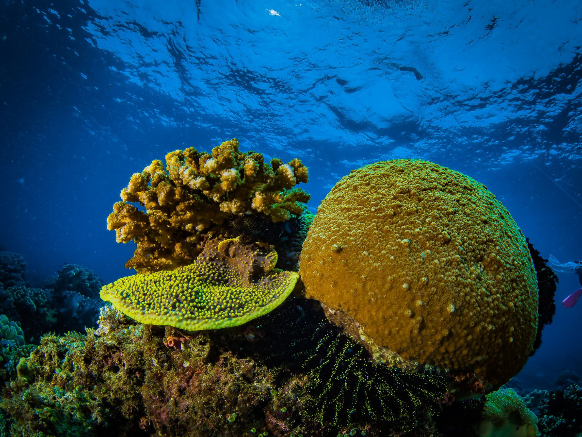 Hacer Buceo en - Lombok
