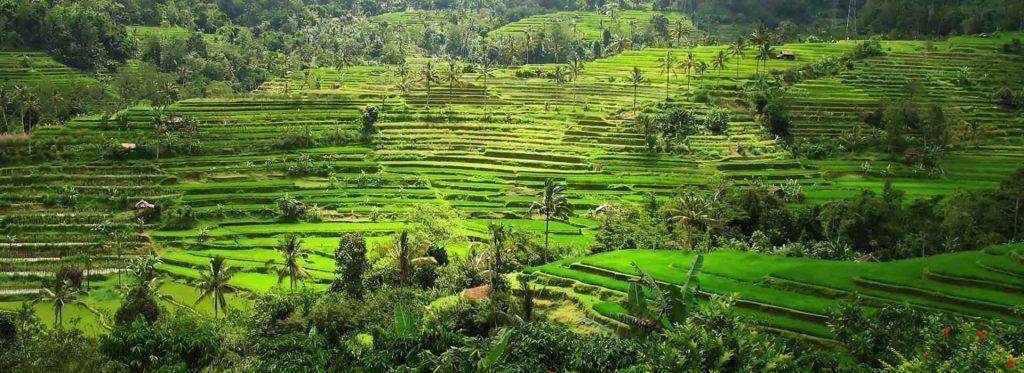 Visitar las Plantaciones de Cacao en Bali