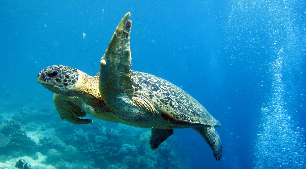 snorkel en Thousand Island