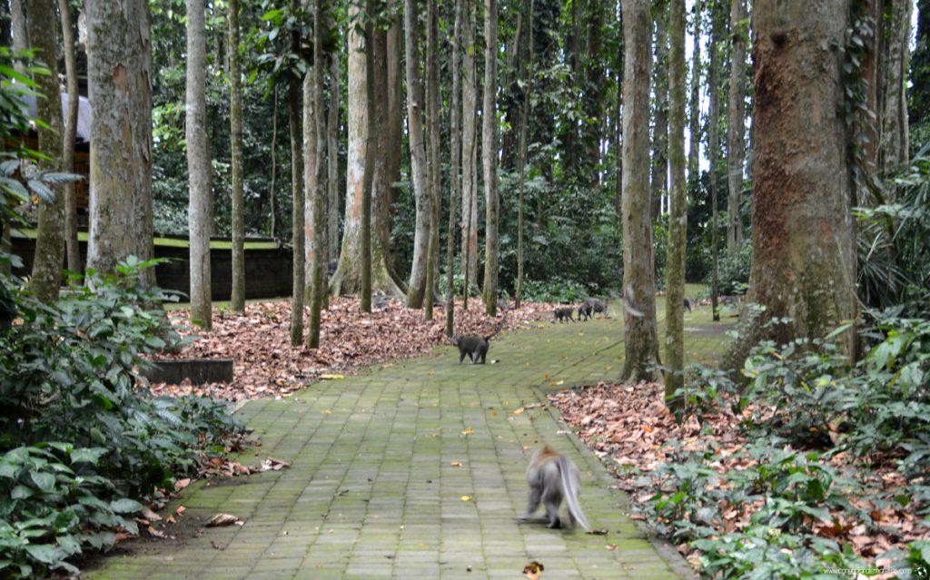 Bosque de Monos en Ubud, Indonesia