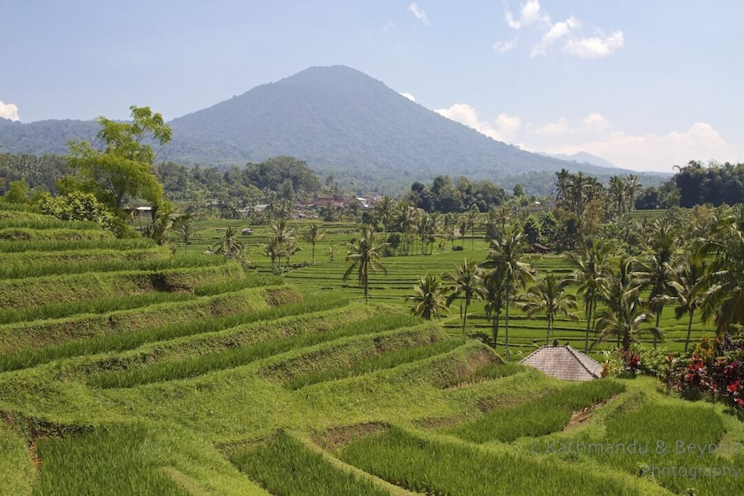 Los Campos de Arroz en Indonesia