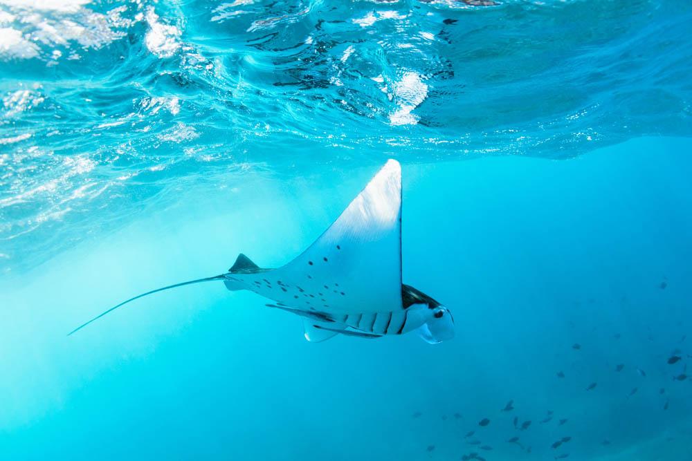 buceo y el snorkel.