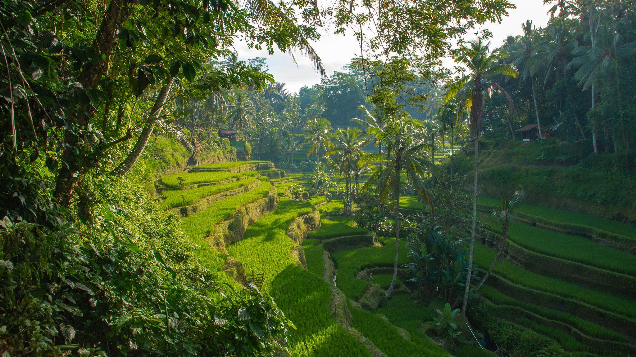 Las 10 mejores cosas que hacer en Ubud, Bali