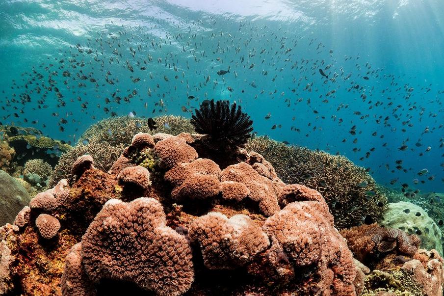 Snorkeling en Nusa Penida