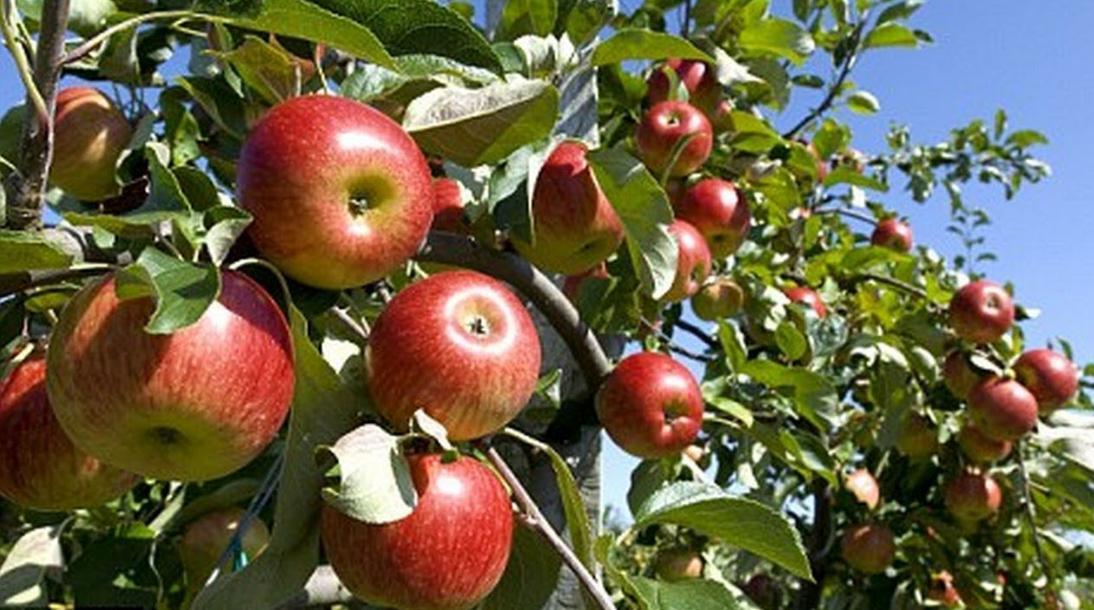 Kebun Apple Farm at Batu