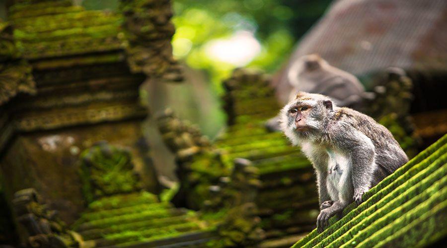 Itinerario de 1 día en Ubud, Bali - Qué hacer y ver