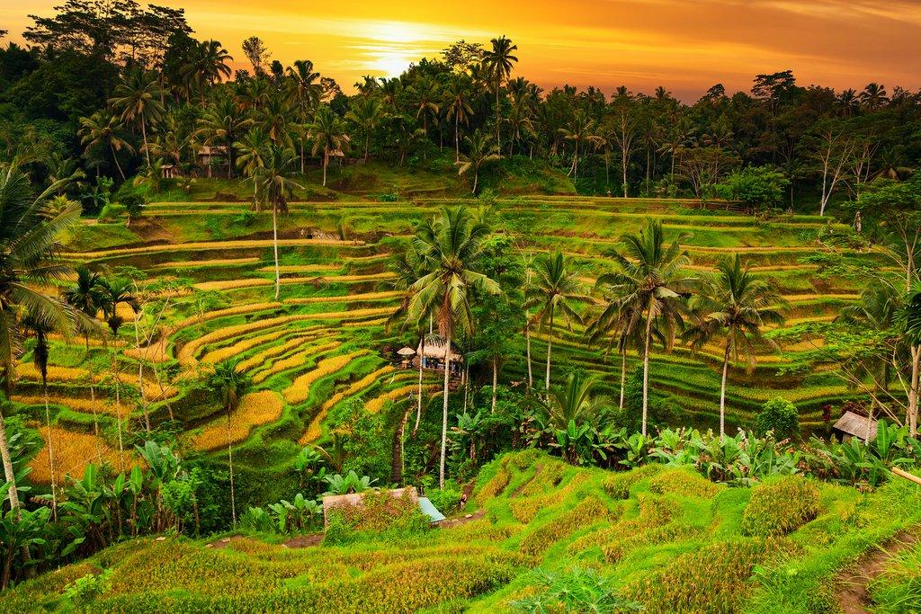 Ubud, Bali : Artes, Terrazas de Arroz, Spa, Yoga