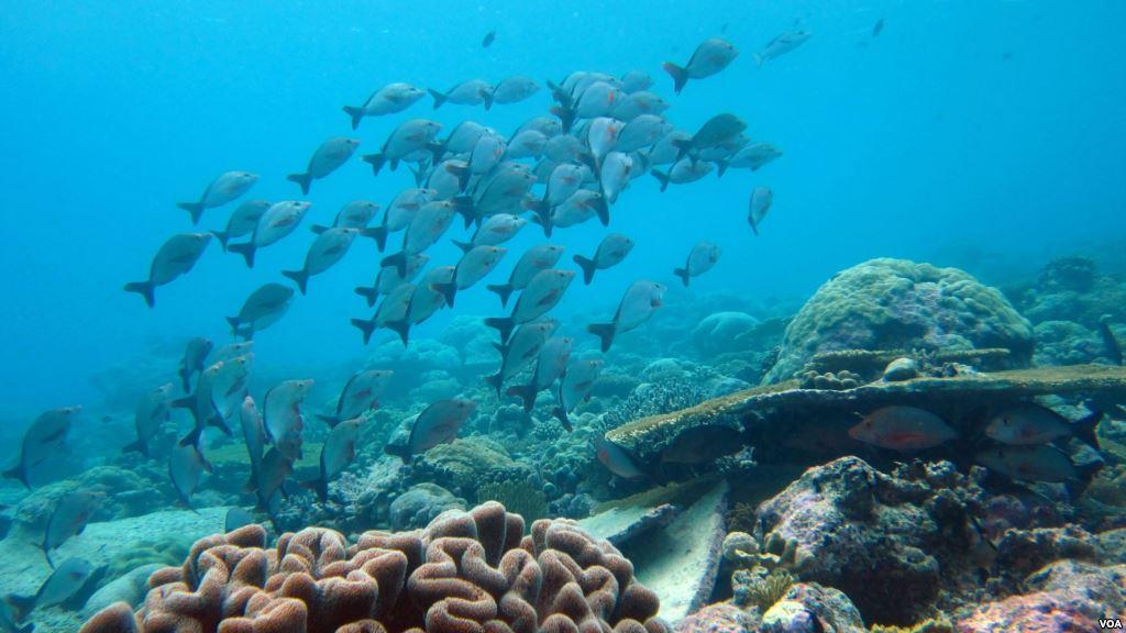 Buceo en Lombok