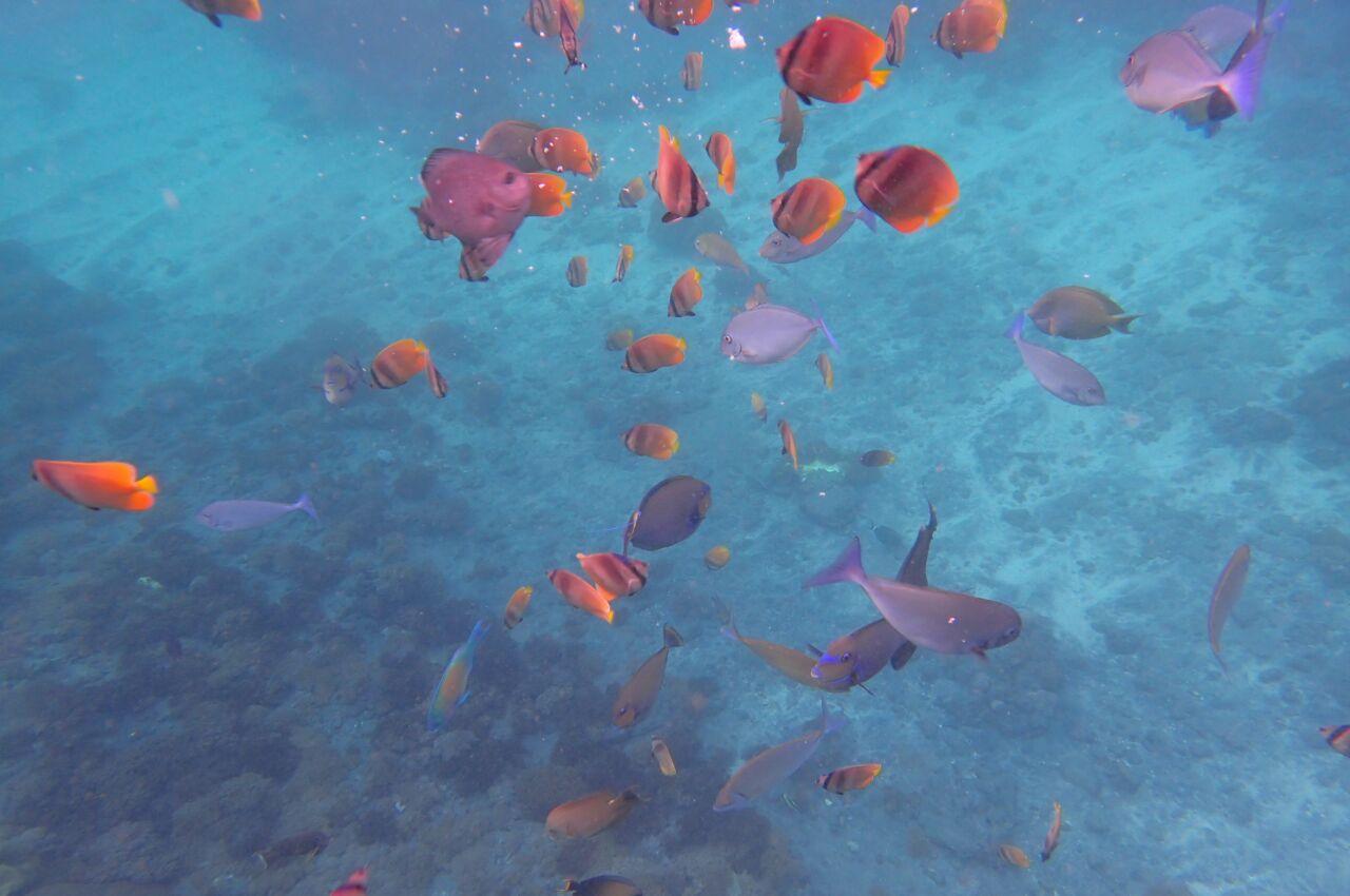 Buceo en Nusa Penida