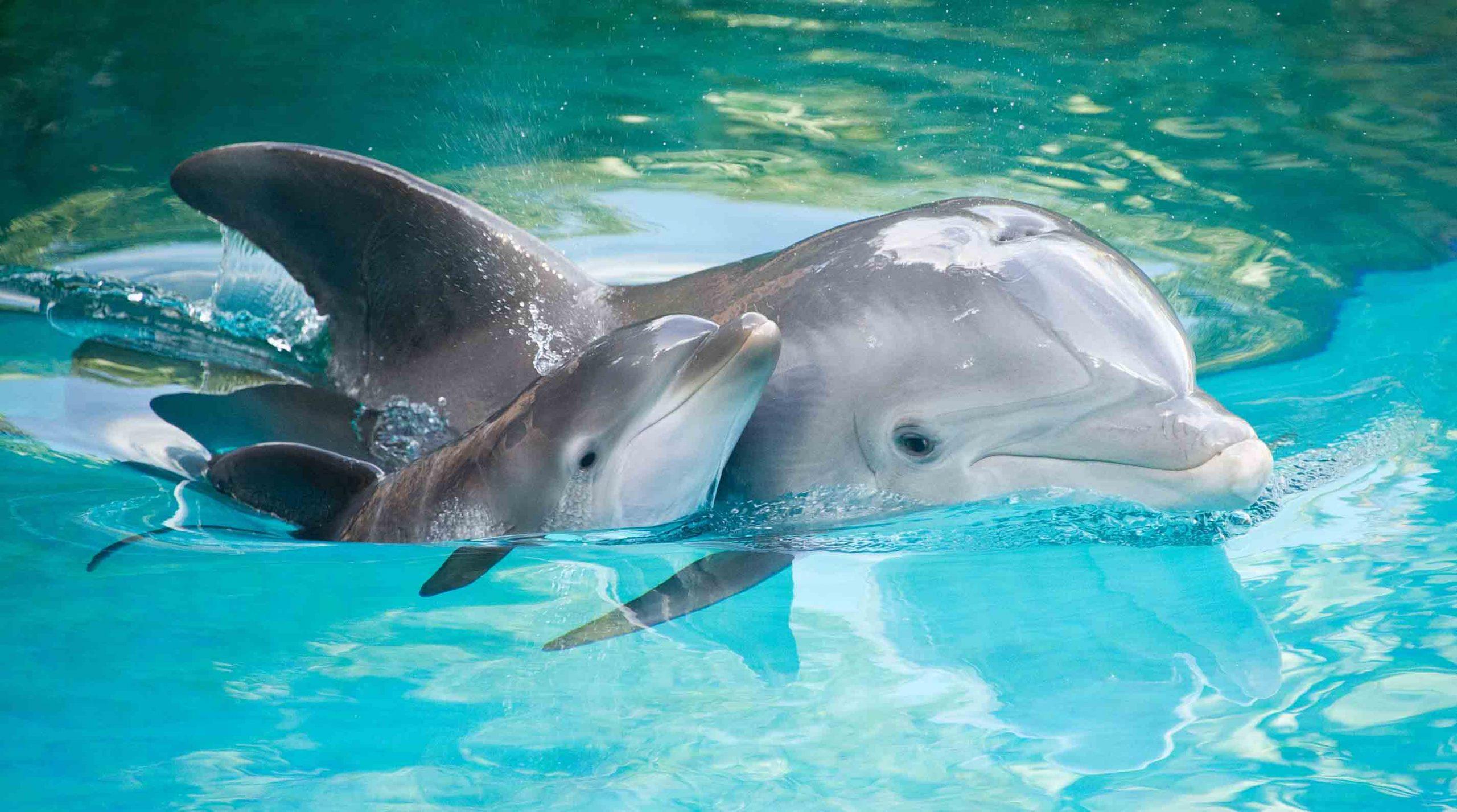 Delfines en playa de Lovina