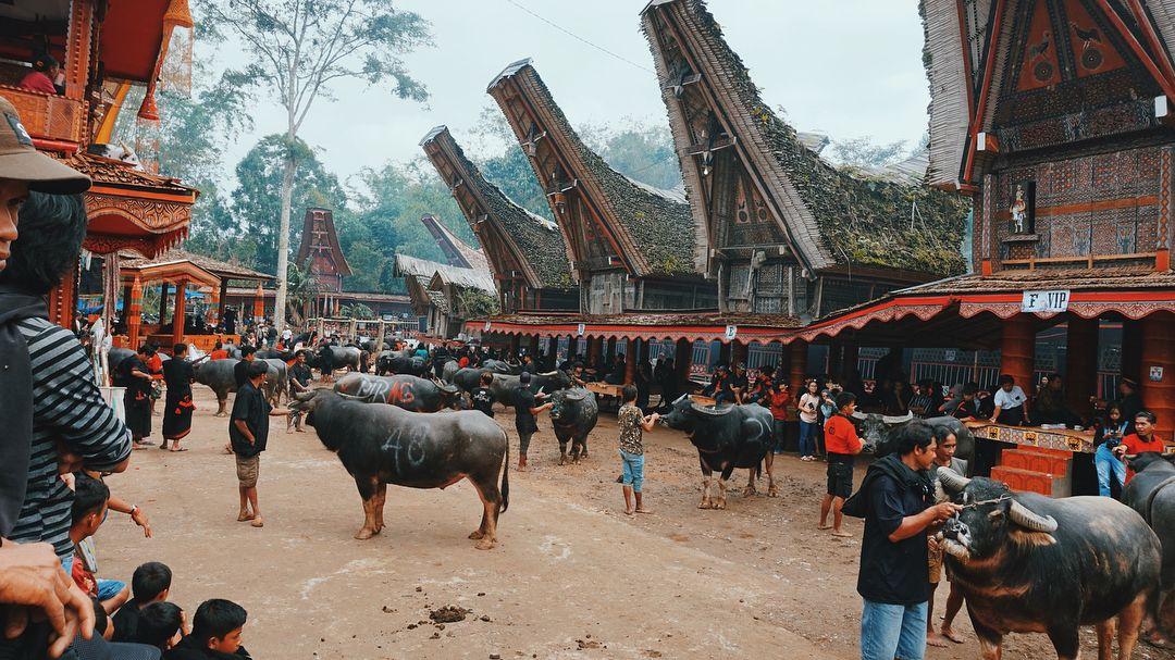 tana toraja funeral ceremony