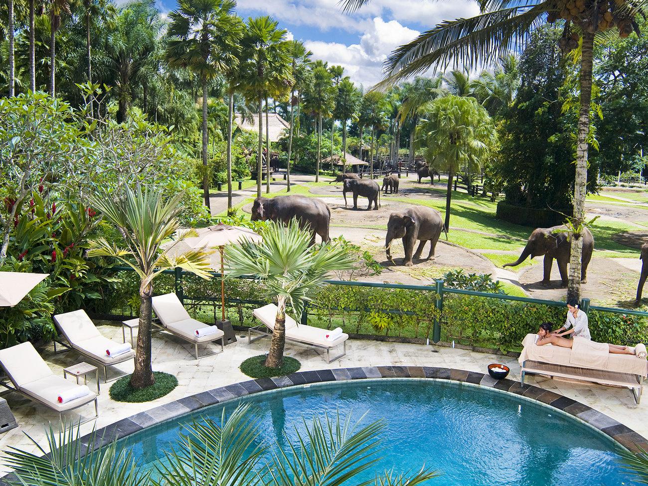 Visita al Elephant Safari Park