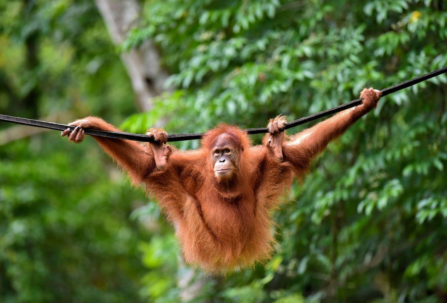 Las 10 principales atracciones turísticas de Indonesia