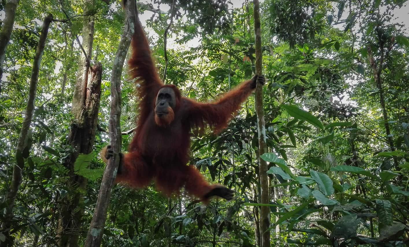 Bosque Bukit Lawang