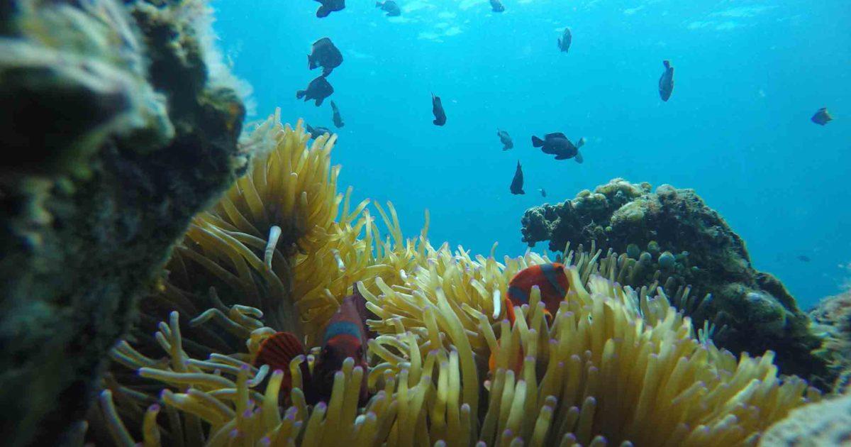 Buceo/snorkel  en Java en Karimunjawa