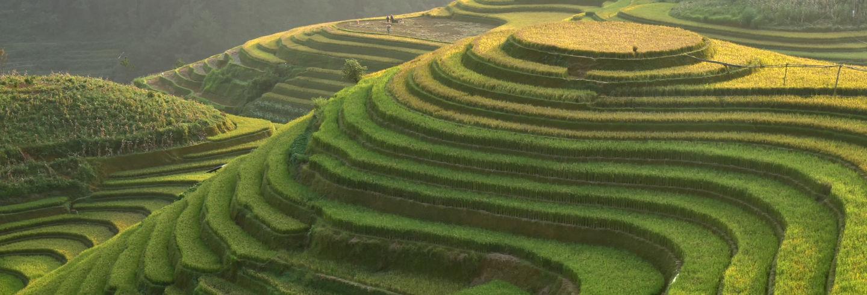 los campos de arroz en Indonesia